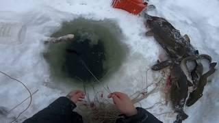 Рыбалка на енисее в 2019г