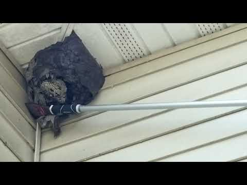 How Cowleys Safely Removes a Bald-Faced Hornets Nest in Ocean Township, NJ