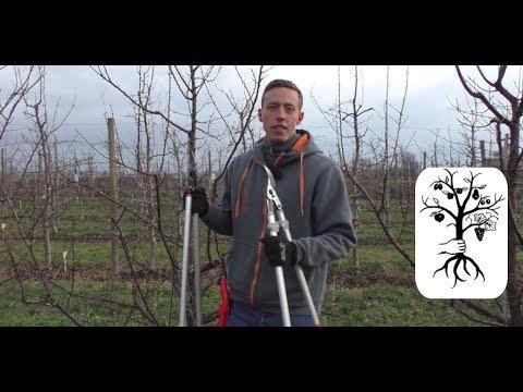 Baumschnitt - Große Äste schneiden und sägen leicht gemacht! Mit Astscheren und Astsägen