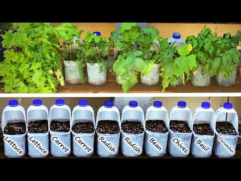 Milk Bottles Make the Perfect Pot for Vegetables and Herbs