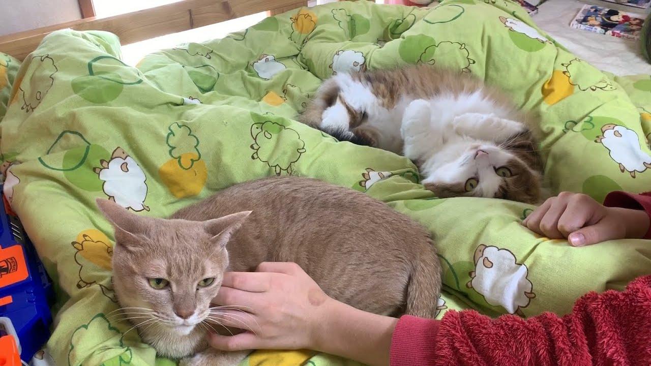 「こっちも撫でてほしいです」と手を上げてそうな猫