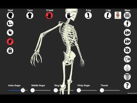 Быстрый способ освоить движение человека. Амплитуда движений частей тела.