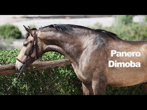 Panero Dimoba (Publicado 11-5-2018)