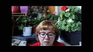 Читаю Эмили Дикинсон