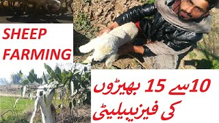 Goat farming business in pakistan || And Price issues