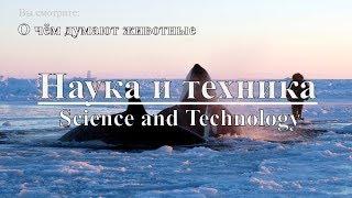 Наука и техника: О чём думают животные | Science and Technology: What do animals think? Discovery.