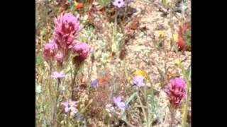 Wildflowers : Dolly Parton