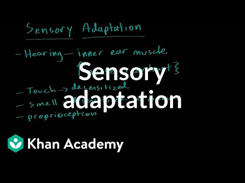 Sensory adaptation (video) Khan Academy