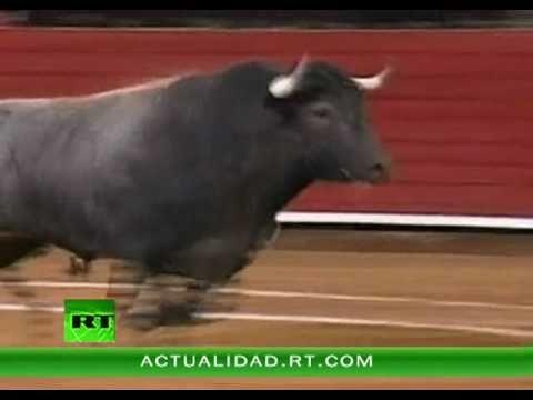 Video: un toro de 500 kilogramos saltó la barrera y cayó sobre un picador