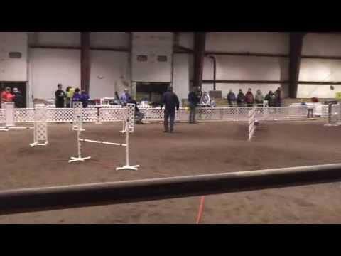 Dalmatian Agility Porter Des Moines 3/20/10