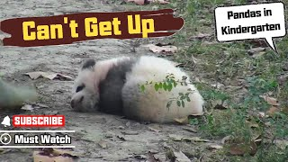 Panda baby tried to get up in the morning, but failed