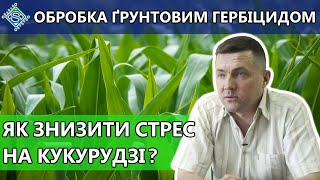 Як знизити стрес від ґрунтового гербіциду на кукурудзі