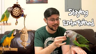 5 Ways to Keep You and Your Parrot Entertained!