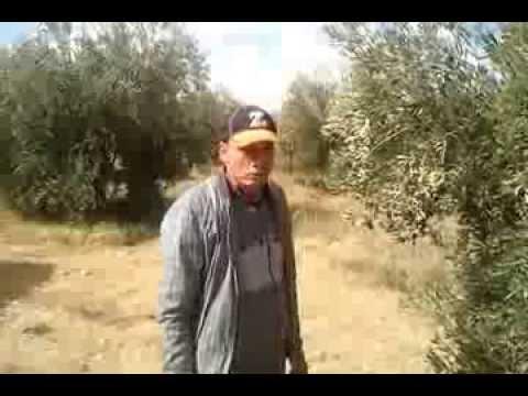comment construire l'huile d'olive