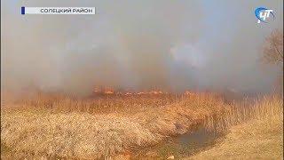 В Сольцах произошло крупное возгорание травы
