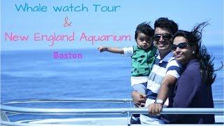Whale watching Boston & New England Aquarium