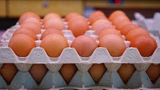 Meski Banyak Beredar Kabar Telur Palsu, Pedagang Akui Tidak Berdampak pada Penjualan