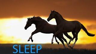 8 Hour Deep Sleep Music: Relaxing Music, Meditation Music, Relaxation Music, Calming Music ☯1048