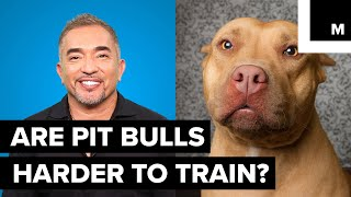 Are pit bulls harder to train