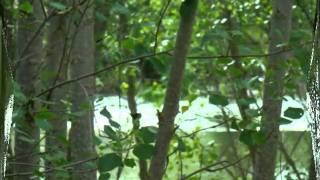 Video del alojamiento Casa Rural El Salidero