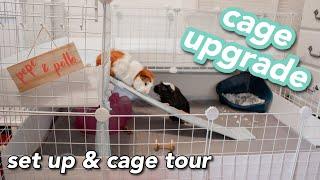Guinea Pig Cage Upgrade (c&c Cage!!!) | Amanda Jule