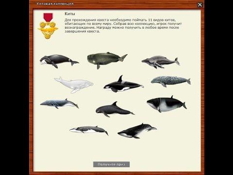 Русская Рыбалка 3.99 Квест Киты