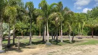 Foxtail Palm Farm