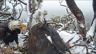 Big Bear Eagles ~ Shadow is the BOMB!! Amazing Fish Delivery w/ SLO MO 5.23.19