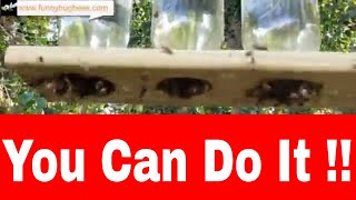 How To: Make Simple, Effective Mason Jar Honeybee Feeders