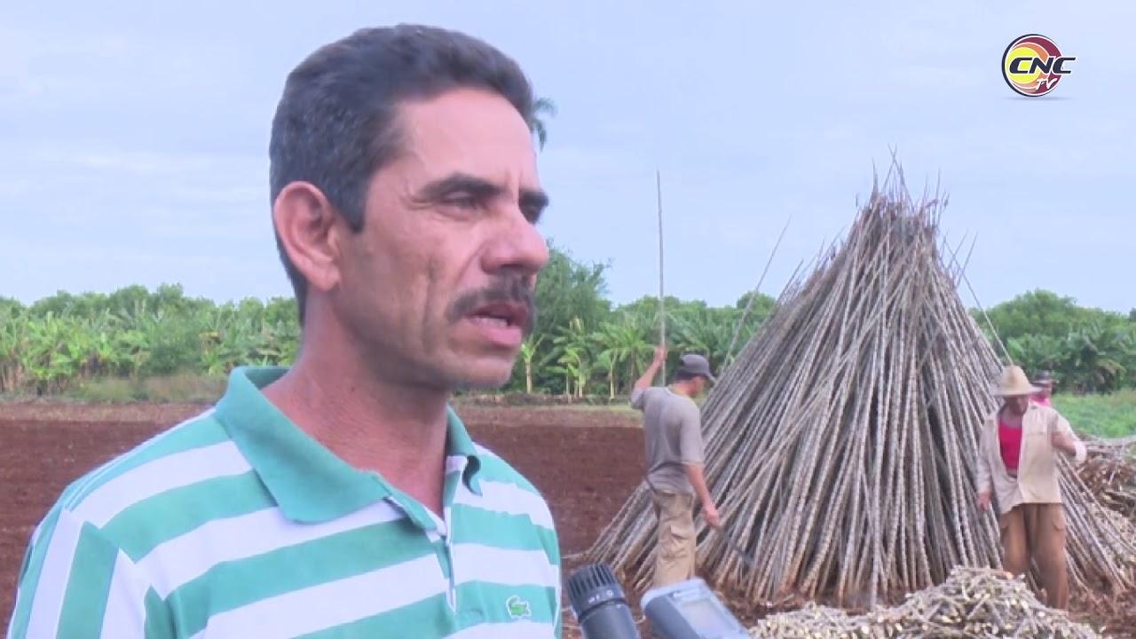 Afectaciones del bloqueo a Cuba no detiene agricultores de Granma