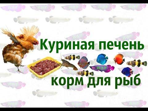Профилактика и лечение заболеваний печени народными средствами