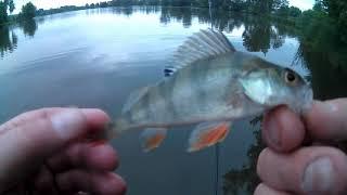 Во сколько нужно ходить на рыбалку