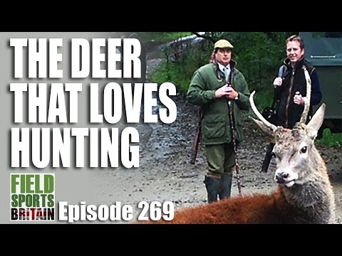 Fieldsports Britain – The Deer that Loves Hunting
