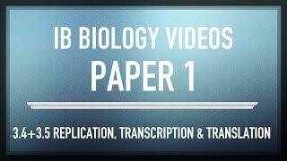 DNA Replication, Transcription & Translation - IB SL Biology Past Exam Paper 1 Questions
