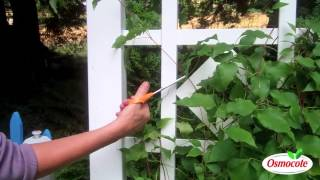How To Prune And Feed Clematis (For A Longer Bloom Season)