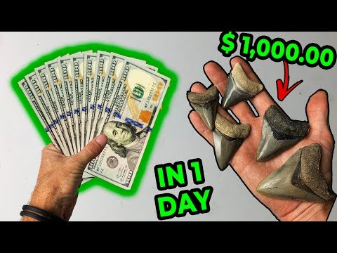 How Much $$$ Can You Make Hunting For Megalodon Shark Teeth?? (Part 1)