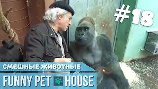 СМЕШНЫЕ ЖИВОТНЫЕ И ПИТОМЦЫ #18 ОКТЯБРЬ 2018 [Funny Pet House] Смешные животные