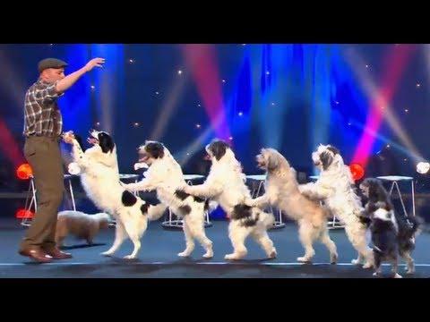 הכלבים המרקדים - מופע מבדר ומקסים!