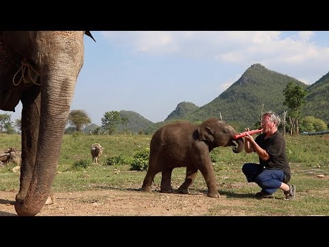 Excited Baby Elephant Wants to Play with the Toy Clarinet