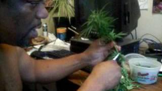 How to Manicure Medical Marijuana