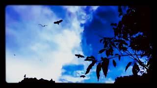 Jamie Landsborough - Waitin' For A Breeze (official music video)