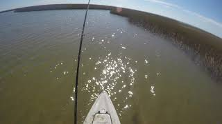 Sight Casting Reds with a Fly in the Marsh, GALVESTON TX