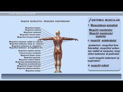 Diagnosticul și tratamentul paraziților