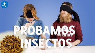 ¿Comerías INSECTOS porque son ricos en proteínas? Los PROBAMOS y te damos nuestra opinión