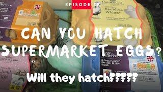 Hatching Supermarket Eggs Part 1