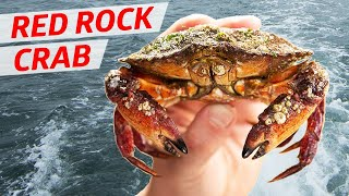 Cooking the Gem of the Pacific Northwest: Red Rock Crab — Deep Dive thumbnail