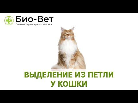 Выделение из Петли у Кошки // Сеть Ветклиник БИО-ВЕТ