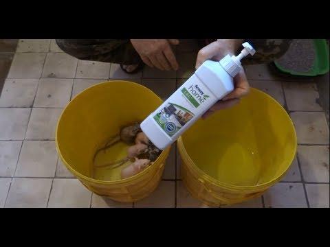 Gyógyszer a paraziták mérgező tisztítására