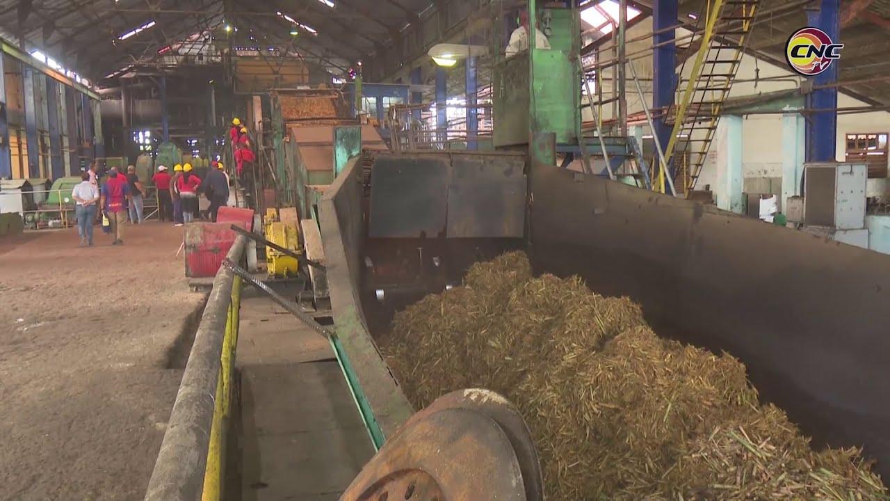 Inició zafra azucarera en Campechuela, mayor productor del grano en Granma