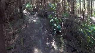 Shoelace Trail, Glenbervie Forest, Northland, NZ
